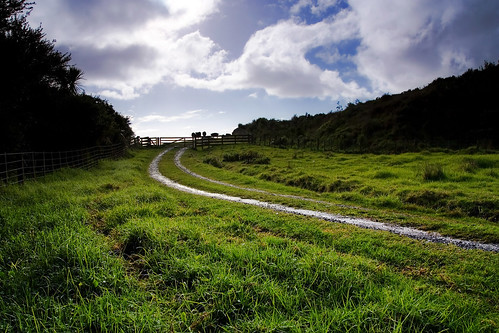 All paths lead to cows by Chris Gin, on Flickr