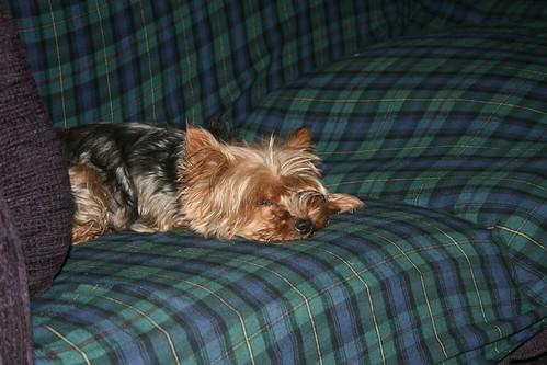 dogs in repose