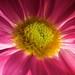 Flower by Dean Pemberton