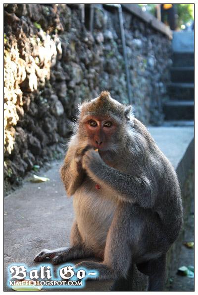 15-Uluwatu famous monkey