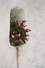 Nieghbor's flowers (kavan.) Tags: old flower window wall canon village iran pot memory flowerpot iranian kurdistan kavan kordestan 400d 70200lf4is