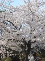DSC02719 (smithtleigh) Tags: japan aomori hirosaki hanami
