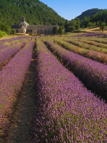 Abbaye Notre-Dame de Senanque (Provence - France)