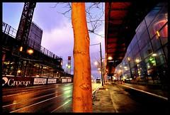you're a long way from home (mugley) Tags: road city windows urban tree wet rain night digital reflections lights construction nikon pavement australia melbourne victoria cranes sidewalk bark urbannature trunk d