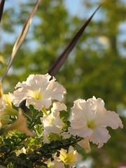 IMG_4830 (nuschu) Tags: florafauna
