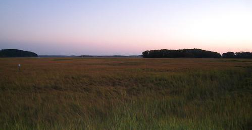 Field just before Crane's Beach