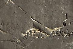 Off the Wall in Seattle (detail 3) 10-11-08 (stevenascroggins) Tags: seattle abstract art history happy layers robertrauschenberg markrothko offthewall ageless franzkline frankstella adreinhardt aaronsiskind robertmotherwell blackpaintings stevescroggins