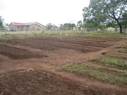 Garden after 3 weeks