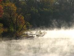 Willow in the Steam (godpasta) Tags: columbus ohio lake willow antrim salix antrimlake lakesteam