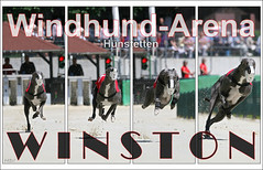 Winston-Collage Hünstetten_1000px