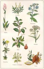 plantes medicinales et alim 3