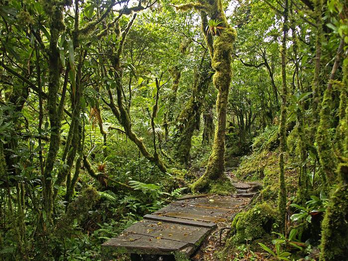Reserva Biológica de Monteverde (Costa Rica)