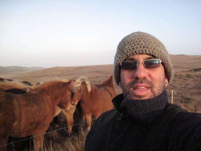 Me and the Icelandic Horses
