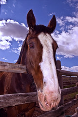 Friendly Stable Horse (sgcallaway1994) Tags: portrait horses horse fence skies head vivid galope dreamstime microstockphotographystock