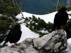 DSC03697 (tylerkb) Tags: germany berchtesgaden eaglesnest