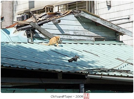 [台北]Cat。屋頂散步道