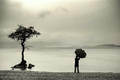 Rainy days (Nicolas Valentin) Tags: uk tree nature rain scotland scenery explore loch lochlomond abigfave nicolasvalentin bratanesque