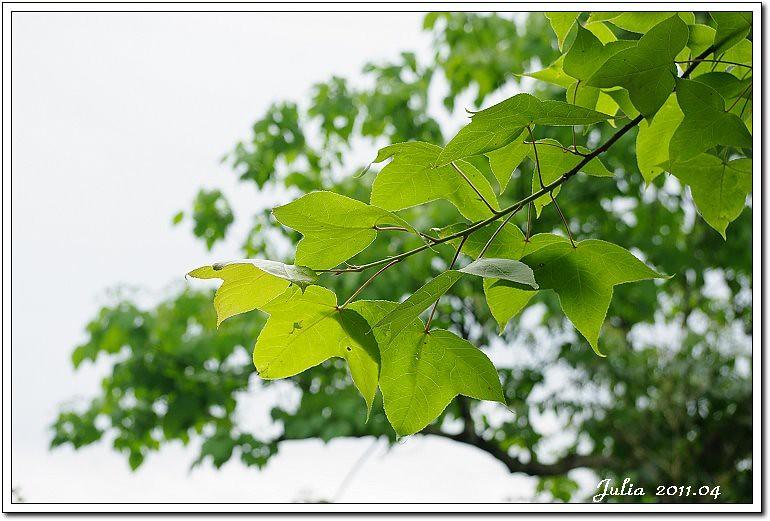仁山植物園 (14)