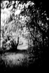 Moving Forest (derScheuch) Tags: tree forest 35mm moving movement experiment apx100 agfa rodinal yashica baum t4 1100 standdevelopment blackandwhitefilmphotography standentwicklunrg