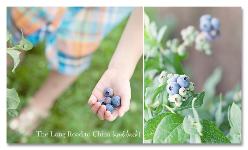 Blue Berries in the palm of her hand Collage