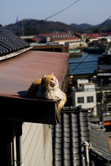 birds eye view (Masakazu Ikeguchi) Tags: japan cat nikon d200  onomichi straycat  bestofcats