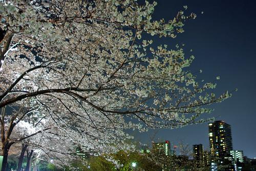 Sakura Tokyo Night