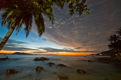 Palm tree at dawn, Patong beach