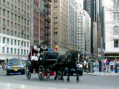 Hansom cab entering Central Park (Jim Lambert) Tags: nyc newyorkcity horses usa ny newyork us video spring unitedstates centralpark manhattan centralparksouth 2008 cps videos 6thavenue 6thave carriages sixthavenue sixthave centralparks w59thst horsedrawncarriages hansomcabs april2008 horsecarriages spring2008 west59thstreet centraldrive w59thstreet 10april2008 april102008 04102008 centraldr