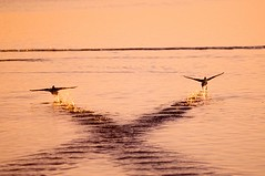 Orbetello, Italy (Andrea Rum) Tags: sunset sea italy birds fly italia tramonto mare wing dream silhouettes lagoon ali uccelli tuscany rum laguna birdwatching orbetello tuscan mywinners coolestphotographers andrearum manfrone