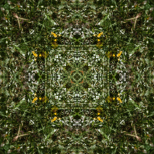 Green Wildflower Kaleidoscope