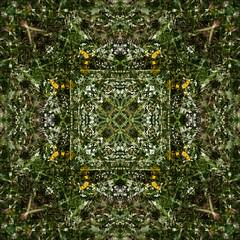 Green Wildflower Kaleidoscope (hz536n/George Thomas) Tags: summer abstract flower green oklahoma flora kaleidoscope 2008 cs3 canon30d canonef70200mmf4lusm