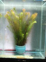 Thủy Sinh Tuấn Anh-Chuyên cây & Rêu Thủy Sinh, Cá Cảnh Biền & Hồ Cá Cảnh Biển - 42