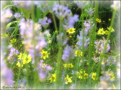 A Little Piece of One Garden (Child of the King Photography) Tags: amazingamateur multimegashot