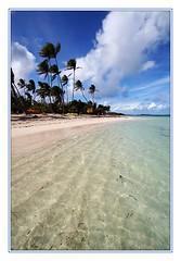 Anse Michel (presquile.crozon.free.fr) Tags: ocean sea mer beach canon eos 350d martinique sainteanne plage palmiers antilles cocotiers ocan westindies