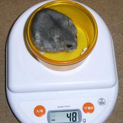 コー太は先週から体重が減りました