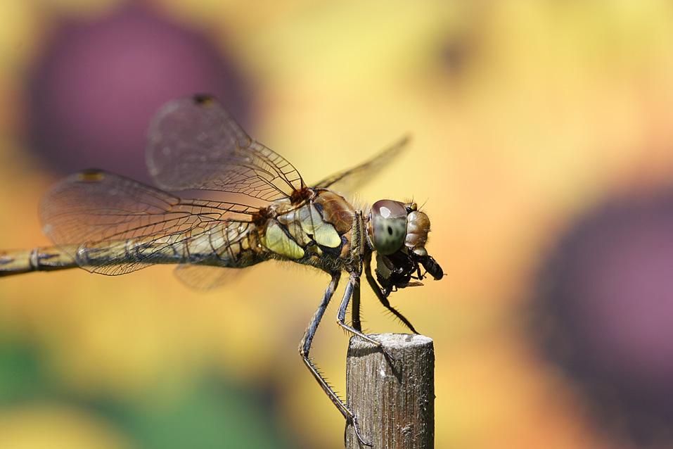 IMAGE: http://farm4.static.flickr.com/3074/2719354308_d1e5426026_o.jpg