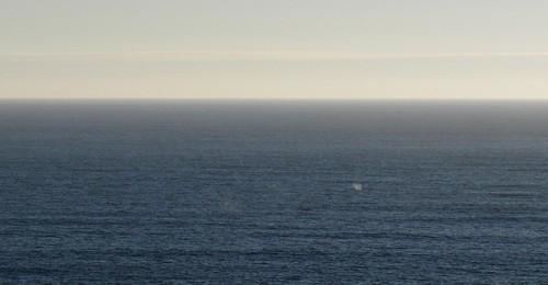 whalefromafar