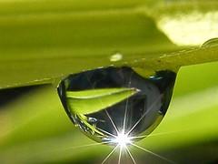 Otro mundos (Flavio_Camus) Tags: macro verde green water shine drop bamboo sparkle bambu brillo chispa
