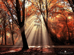 Dressed to Shine III (larsvandegoor.com) Tags: autumn trees light red fall sunshine forest landscape ray path explore rays sunrays frontpage sunbeam sunray amsterdamsebos idream 1000faves larsvandegoor thesecretlifeoftrees 1200faves 2500faves