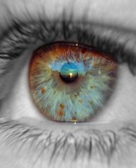Фото 1 - Глаза и сердечно-сосудистая система