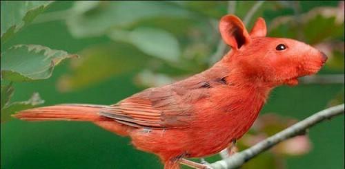 حيوانات وطيور لم تشاهدها من قبل  ( فوتوشوب ) 2823448000_d5df82124b.jpg?v=0