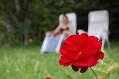 Ore - jardin - rose