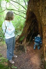 tree tunnel (dolanh) Tags: lucas renee oregoncoast oswaldweststatepark shortsandsbeach