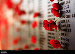 Memories of Heroes (War Memorial, Canberra) (Kyaw Photography) Tags: trip flowers canon eos rebel 50mm memorial war raw bokeh australia single canberra xsi 450d