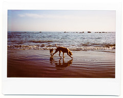 Splashing Around (AndyWilson) Tags: beach dogs polaroid sand fuji wide instant 100 lowtide hastings instax splashing chpe08 chpb09 awch09 ajwch