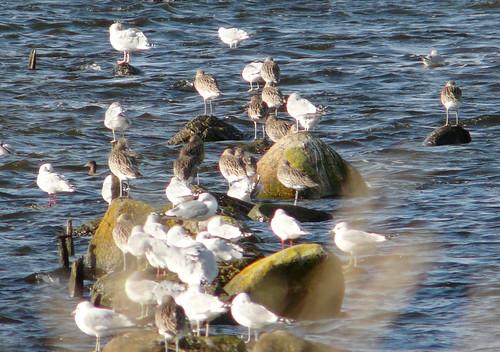 Birds\ on rocks