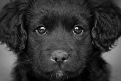 Through the eyes of a puppy (macropoulos) Tags: dog black puppy bravo 500v20f 500v50f 1000v100f gettyimages topf1000 1500v60f 1000v40f canonef100mmf28macrousm 3000v120f 6000v240f canoneos400d 1000faves 100faves100comments1000views infinestyle ysplix flickrlovers vosplusbellesphotos ysplixblack theflickrcollection gettyimages:date_added=pre20110607
