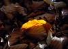 Lights in the wood - 15 (cienne45) Tags: carlonatale cienne45 natale genoa italy nature wood light woods autumns fall leaf leaves naturesfinest friends explore exploreexset explore1336