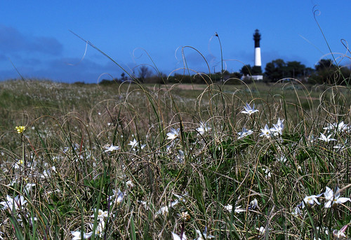 Spring Wildflowers with the Quequén Lighthouse by katiealley on Flickr