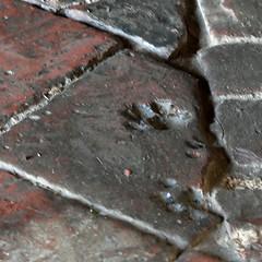 Cat paw impression (by Walwyn)